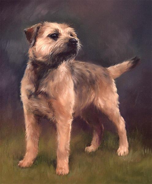 Stanhope - Border Terrier L