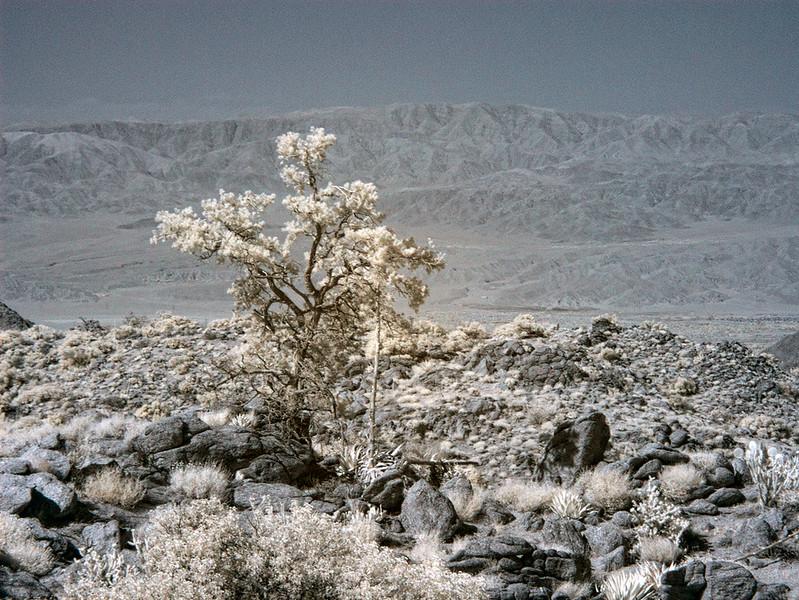 desert-0355