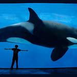 Whale-Alex-3c