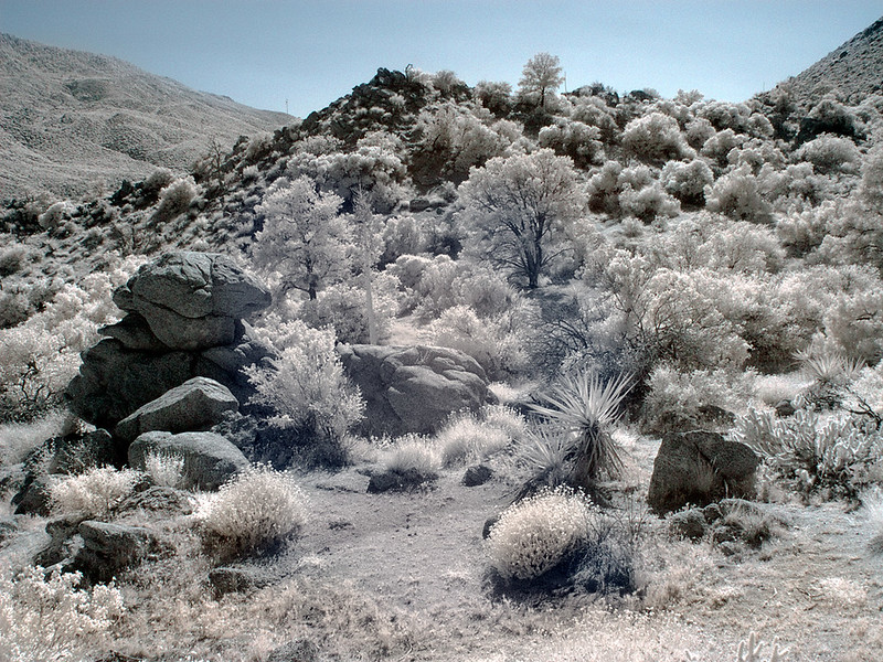 desert-348-copy