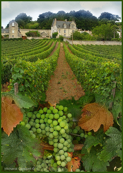 Loire-Valley-Winery