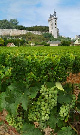 Loire-wine-2