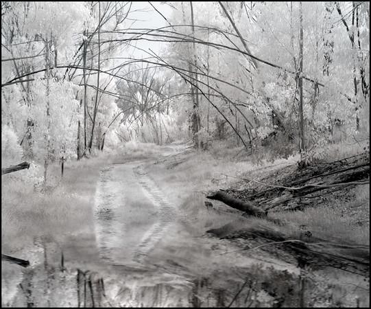 path-w-reflection0280