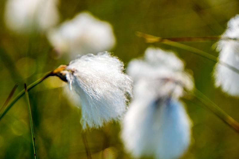 bpg-cotton-cu-4571