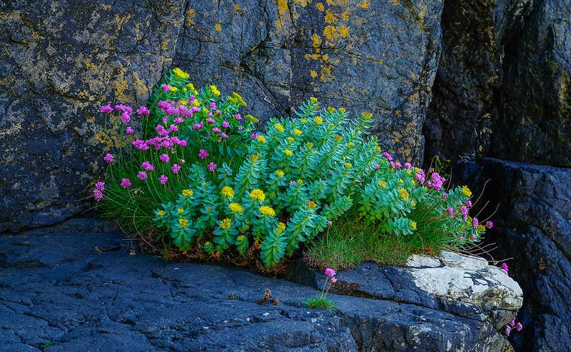 flowers3895