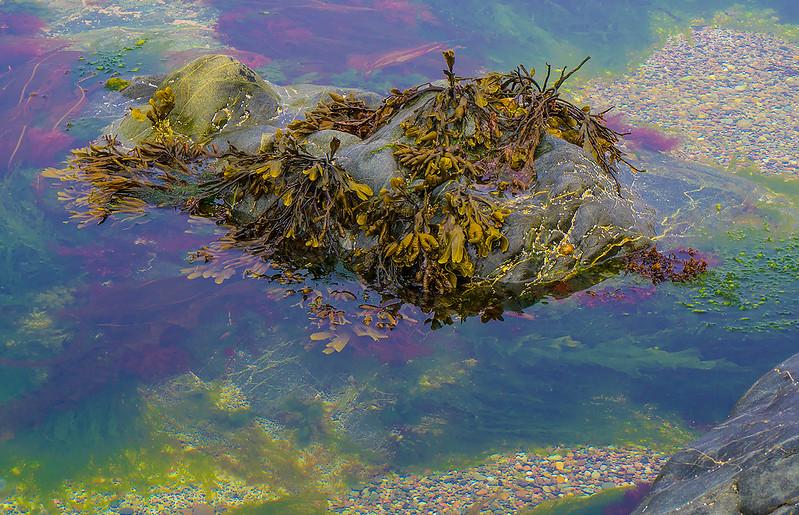 Sea-weed-5892