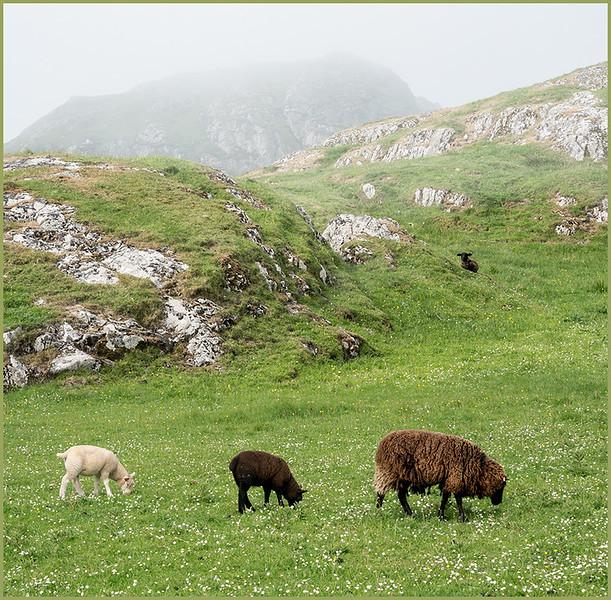 Duni-sheep-fog-803-flat