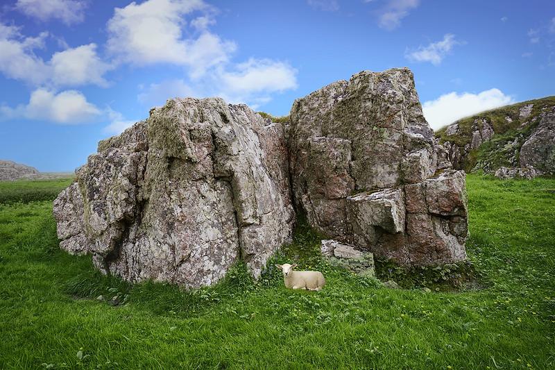iona-rocks-lamb-y