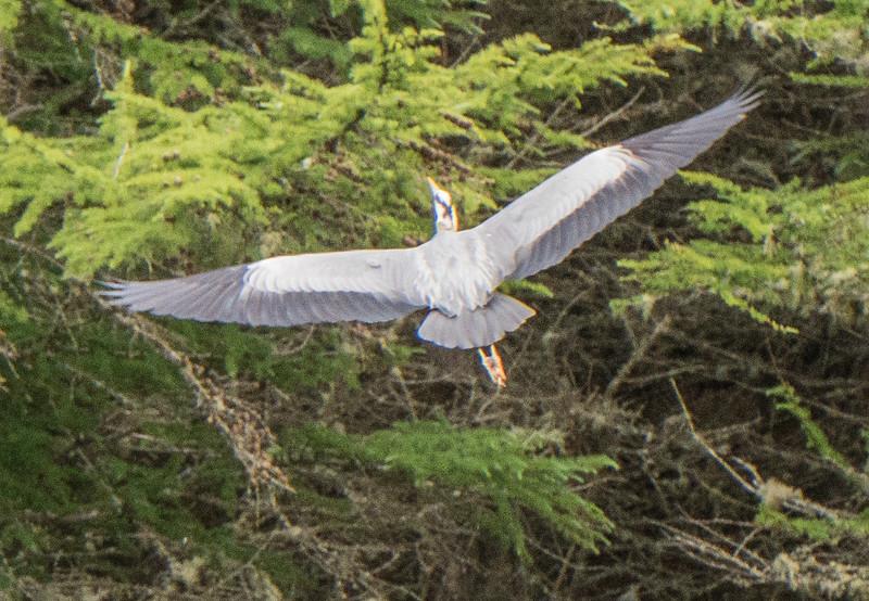 Heron-C6886