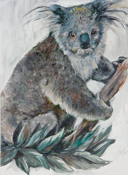 Koala 13 x 17 300 dpi