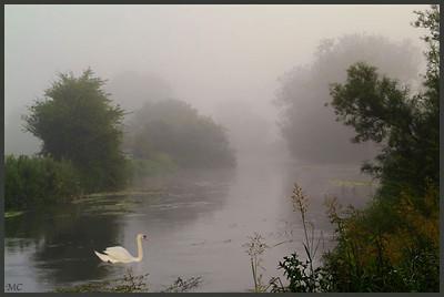 swan-avonflt copy