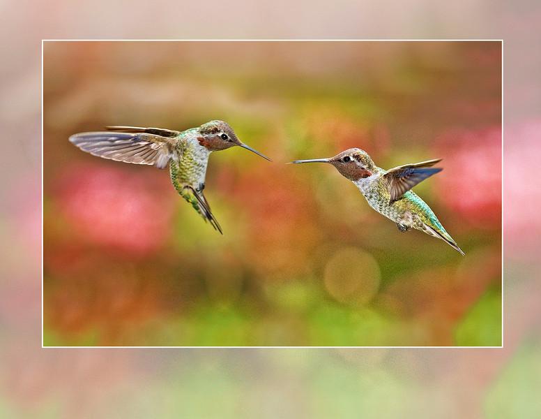 2 Hummingbird y