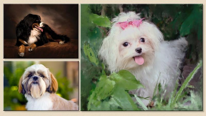 3 dog pic