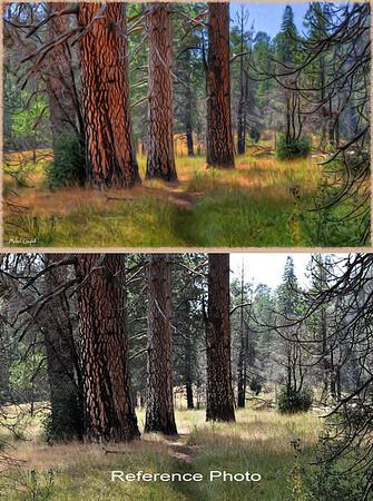Palomar-fir-trees-BA