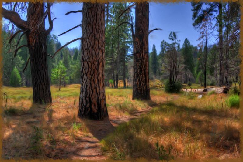 Palomar-3-trees-pntd