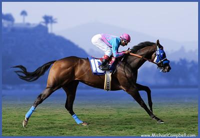 horse-polo-