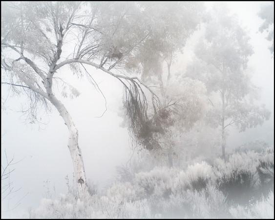 scripps-lake-mist