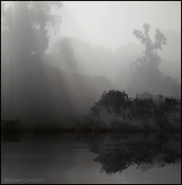 scripps-trees-fog