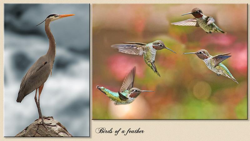Heron Hummers