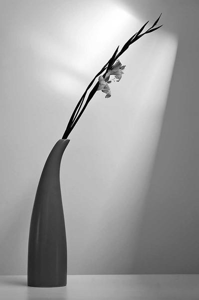 Gladioli - Study Number 1
