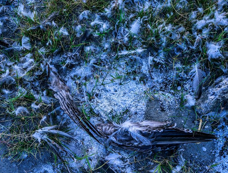 Mono Lake_DSCF3222