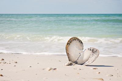 Even the shells display 'Love' on Honeymoon Island!
