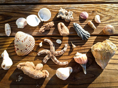 Collecting Starfish & Shells!