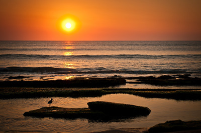 Sunrise This Morning With A Cute Bird Posing For Us At Canova Beach!
