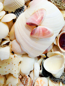 Shells On The Beach