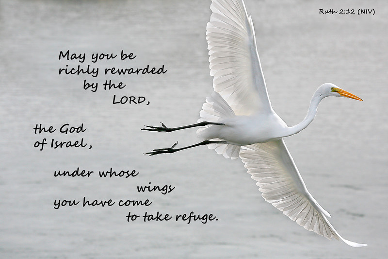 "(Ruth 2:12)  ""Wings of Refuge"""