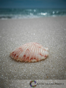Panama City Beach Seashell