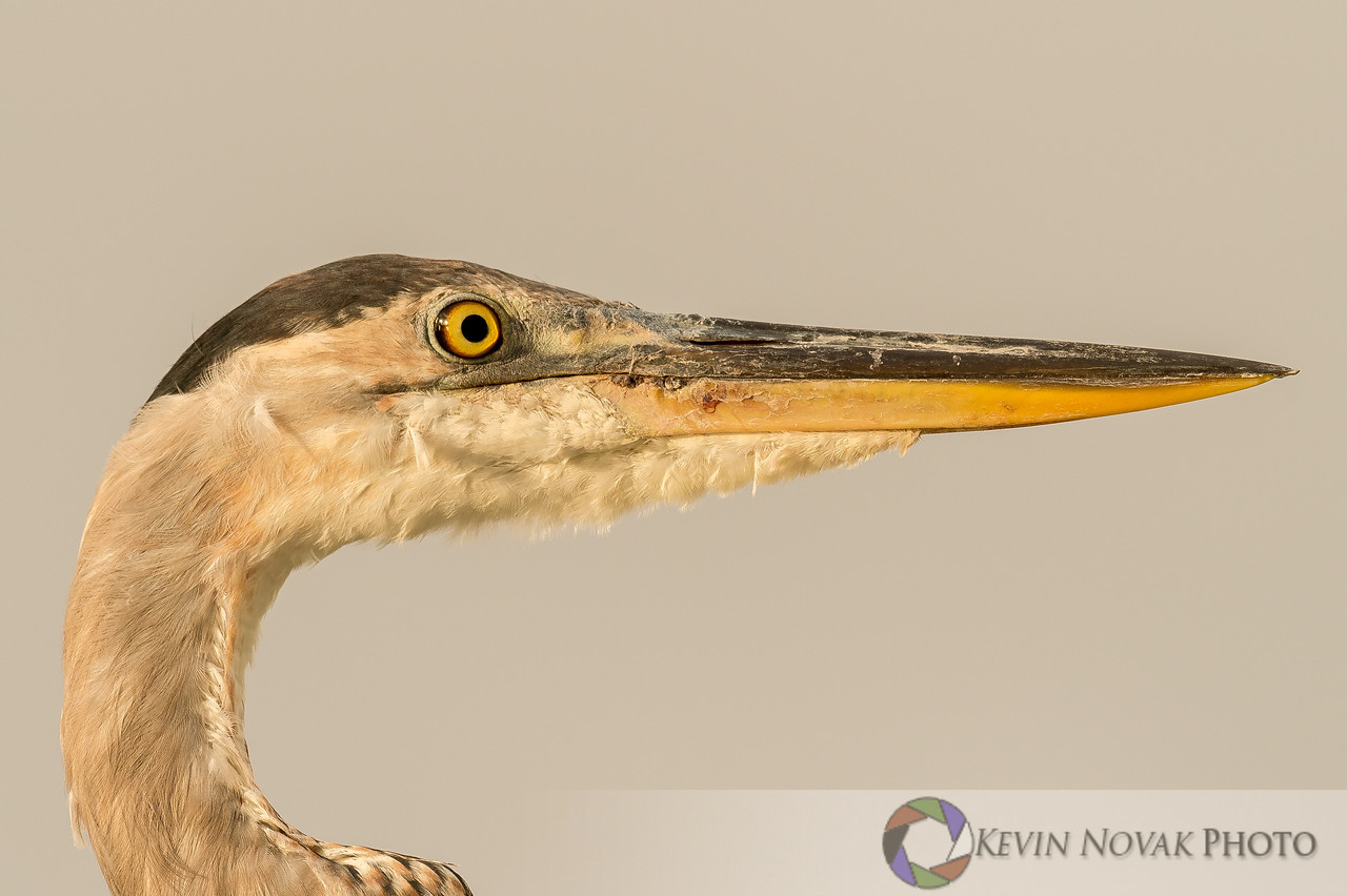 Profile of the heron.