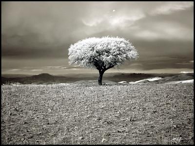 Landscape Bolivia