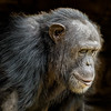 Captive animals in zoos, wildlife parks, rescue centres and the like