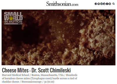 Scott Chimileski Smithsonian cheese mites