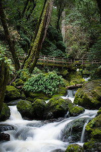 Hidden Bridge over Cataract Creek