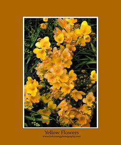 yellow flower-0856