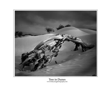 tree in dunes