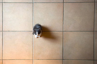Very Young Kitten on Tiled Floor