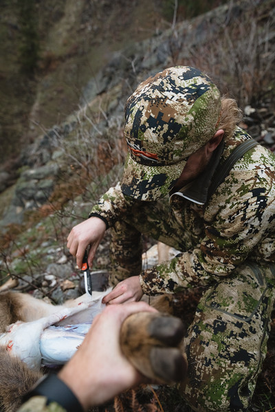 Austin Heinrich (no IG) cleaning his Idaho mule deer buck. November 2017