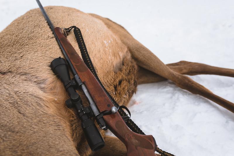 Sam Averett (@samaverett) hunting cow elk during Montana's shoulder season.
