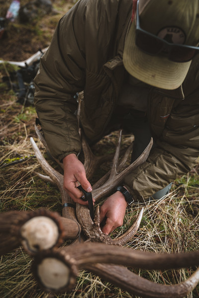 Sam Averett (@samaverett) taping up a mule deer shed along with elk sheds in Oregon.