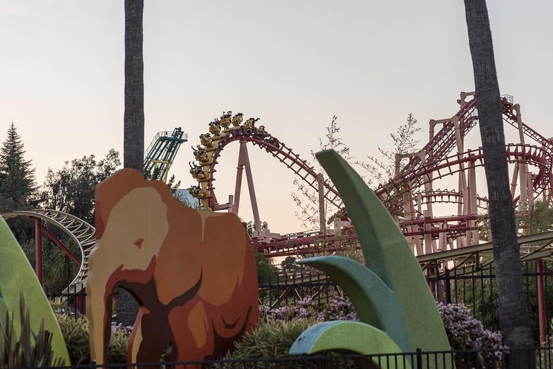 Six Flags Favorites-627