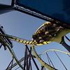 Six Flags Favorites-534
