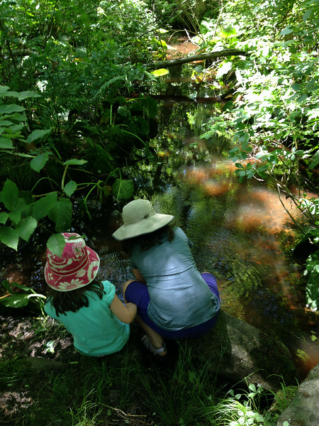 Exploring the stream at Waskosim's Rock trail, Chilmark.