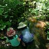 Exploring the stream at Waskosim's Rock trail, Chilmark.