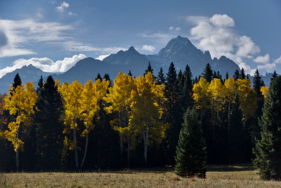 Sneffels Morning Aspen