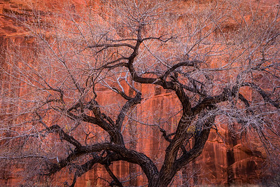 Tangled Branches in Neon Canyon