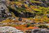 Painted Tundra