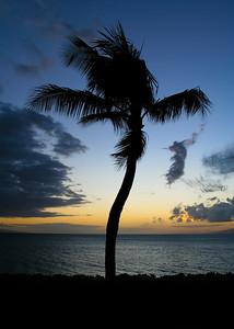 Sunset Palm #4